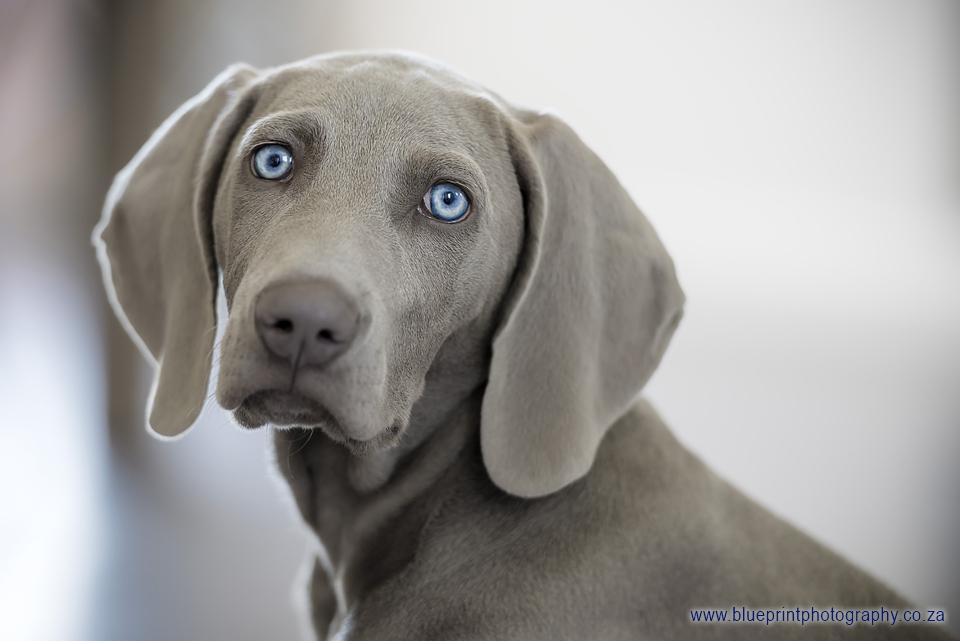 Anushca & Dog