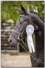 Horse Show 006 copy