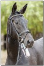 Horse Show 014 copy