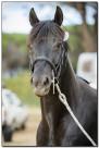 Horse Show 028 copy