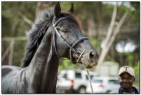 Horse Show 038 copy