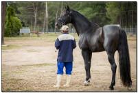 Horse Show 043 copy