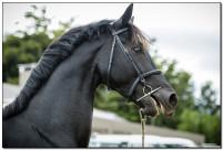 Horse Show 058 copy
