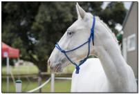 Horse Show 065 copy