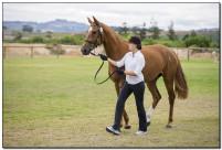Horse Show 079 copy