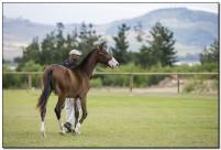 Horse Show 086 copy