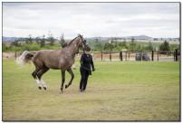 Horse Show 090 copy