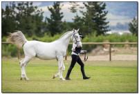 Horse Show 094 copy
