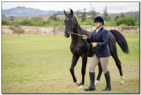 Horse Show 101 copy