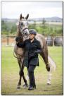 Horse Show 103 copy