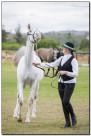 Horse Show 105 copy