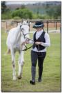 Horse Show 121 copy