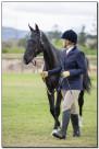 Horse Show 123 copy