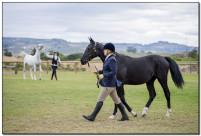 Horse Show 124 copy
