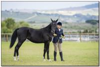 Horse Show 151 copy