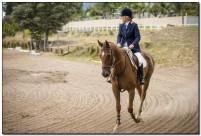 Horse Show 170 copy