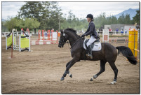 Horse Show 173 copy