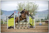 Horse Show 195 copy