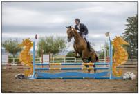 Horse Show 198 copy