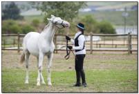 Horse Show 204 copy