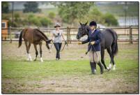 Horse Show 207 copy