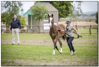 Horse Show 211 copy