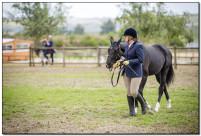 Horse Show 232 copy