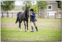 Horse Show 239 copy