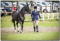 Horse Show 240 copy