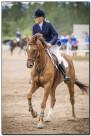 Horse Show 245 copy